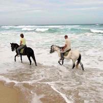 chevaux du lac.jpg