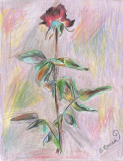 3 Rose.png