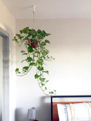 Plant Hook 1.jpg