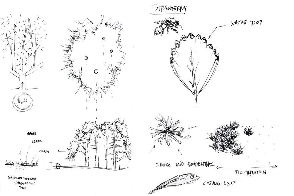 Water Harvesting Sketch.jpg