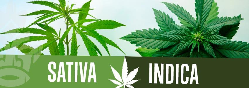 Types of medical marijuana to treat cancer