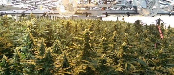 Aphria Medical Marijuana Dispensary in Florida