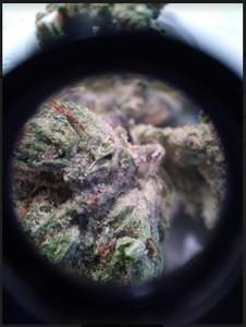 Headband strain marijuana flower up close
