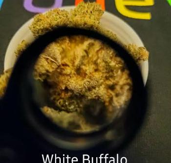 White Buffalo Sativa Strain Review   Trulieve TruFlower