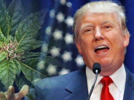 Trump May Back Bipartisan Bill Easing Federal Marijuana Restrictions