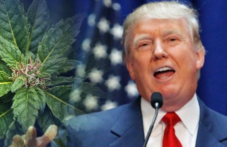 Trump on marijuana