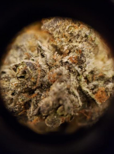 White Buffalo strain up close