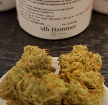 TruFlower 9LB Hammer Strain Review – Trulieve Products