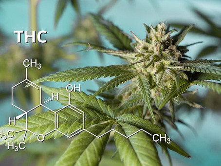 CBD vs. THC - What is The Difference? [Everything You Need to Know in 2021]