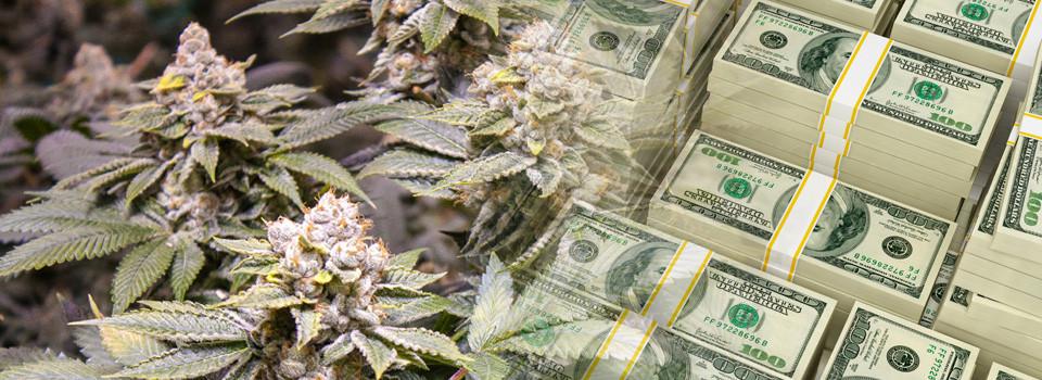 florida medical marijuana banking