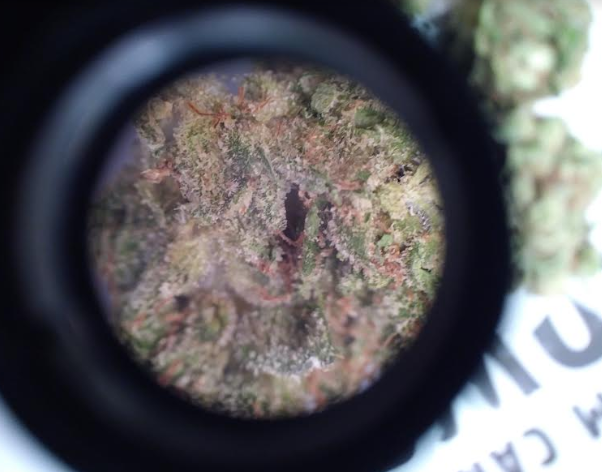 Velvet Glove Indica Marijuana strain picture