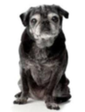 Professional Senior Dog Care Services