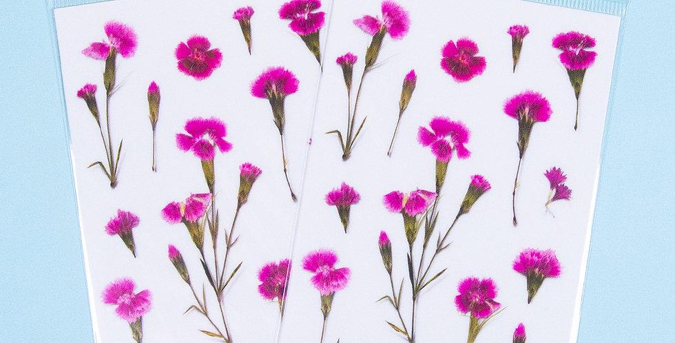 APPREE China Pink Sticker
