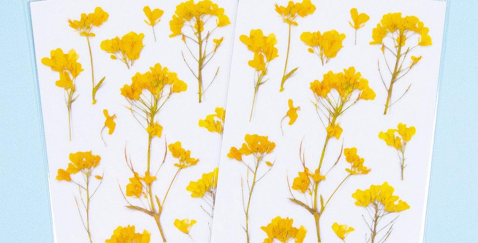 APPREE Rapeseed Flower Sticker