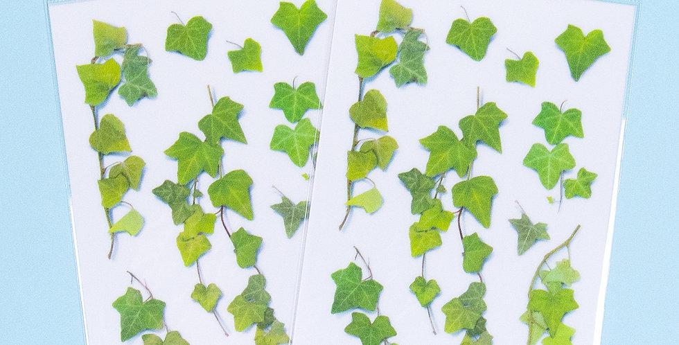 APPREE Ivy Sticker