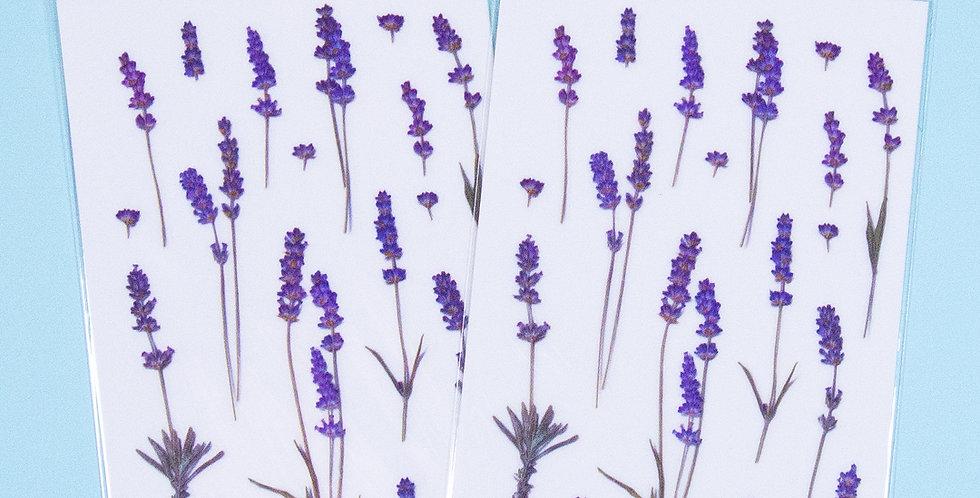 APPREE Lavender Sticker