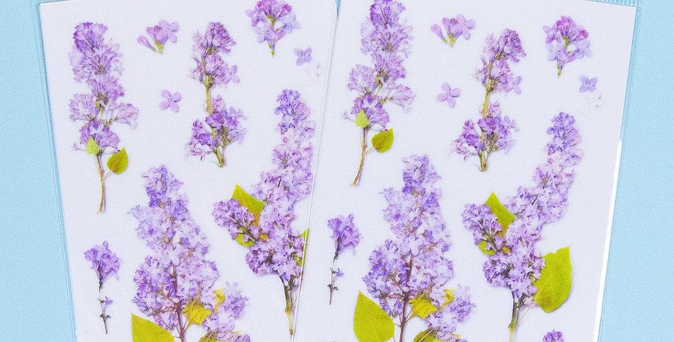 APPREE Lilac Sticker