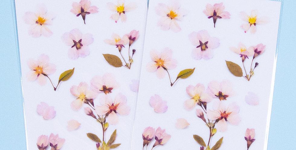 APPREE Cherry Blossom Sticker