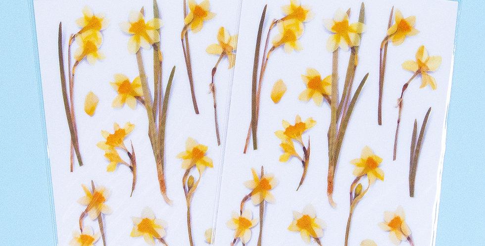 APPREE Narcissus Sticker