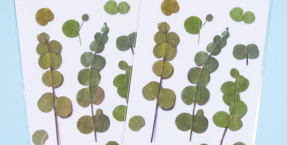 APPREE Eucalyptus Sticker
