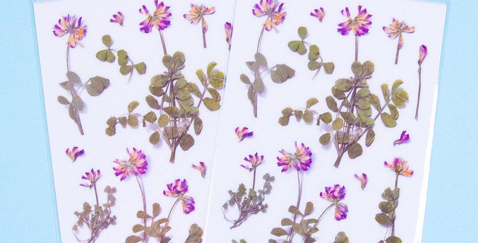 APPREE Astragalus Sinicus Sticker