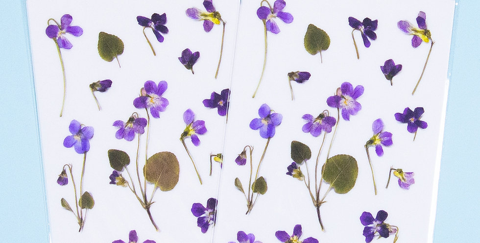 APPREE Manchurian Violet Sticker