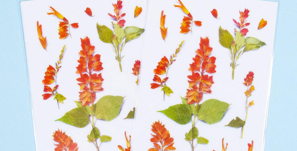 APPREE Salvia Sticker