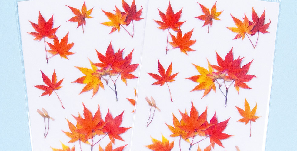 APPREE Palmate Maple Sticker