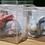 Thumbnail: Bunny-shaped soaps