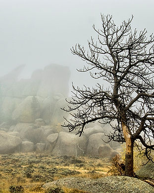 Vedauwoo, The Nautilus and tree in  fog.