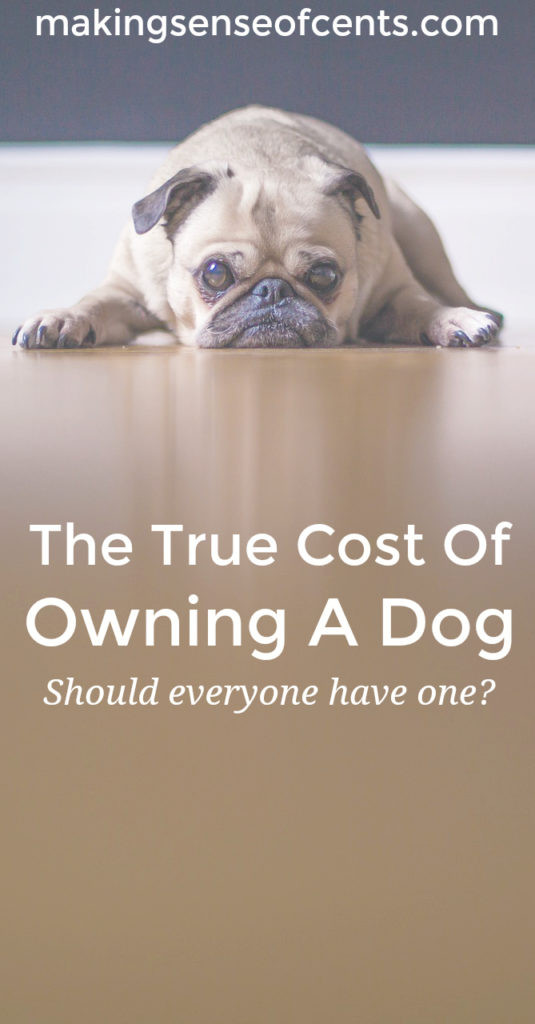 Owning a dog or other pet is a lot of work and even a lot of money. Before you jump into pet ownership, you should fully think about the responsibility.