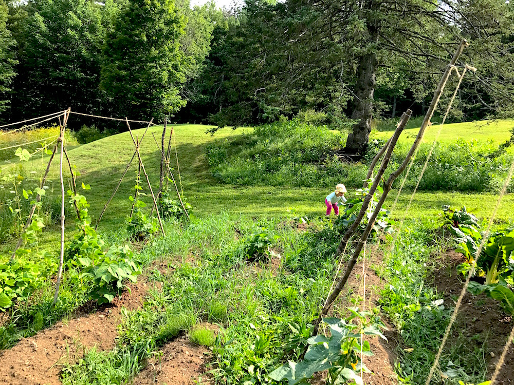 garden - How Elizabeth Reached Financial Independence by 32 And Moved To A Homestead