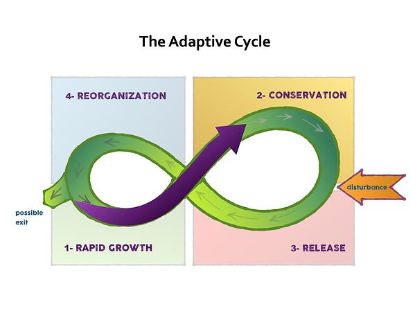 adaptive cycle 2.png