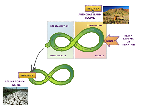 adaptive cycle with regimes.png