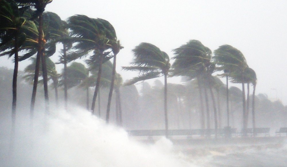 Palm trees during a hurricane