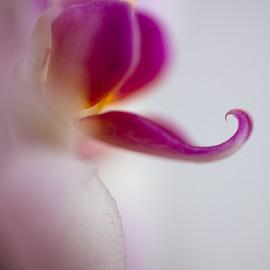 MeredithCarlson_Orchid_5x5_aluminumwhite