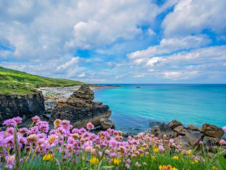 5 Gardens to visit on Cornwall's Roseland Peninsula
