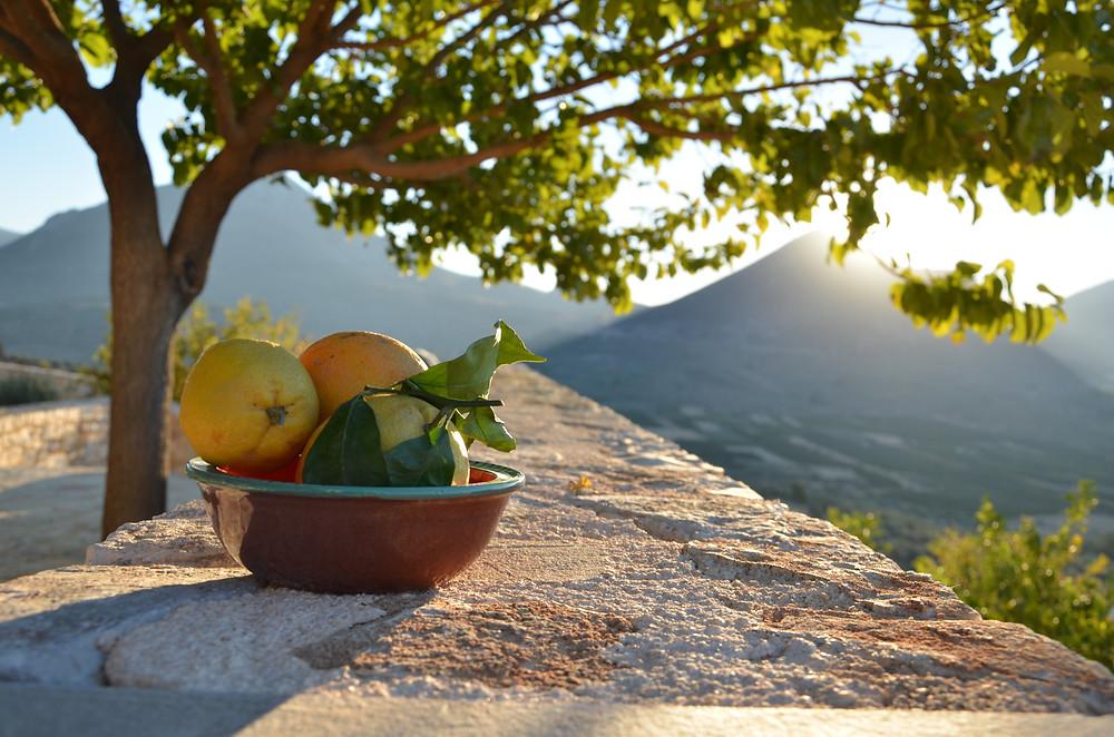 Fresh oranges are abundant in the area