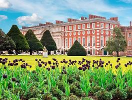 Hampton court tulips_edited.jpg