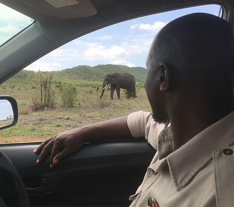 Our guide at an elephant sighting