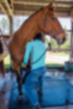 Horse massage, equine massage, equine body work, equine sports massage, horse sports massage, cold backed, equine performance problems, horse sore back, horse stiff neck, horse chiropractor, horse physical therapist, horse physical therapist, stretching back and shoulder muscles during massage bodywork therapy session