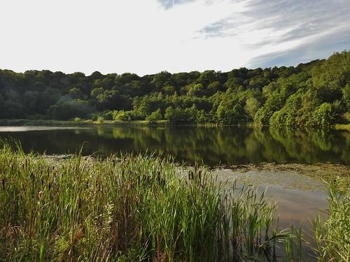 Brockholes Nature Reserve near Preston, Lancashire, England - August 2016