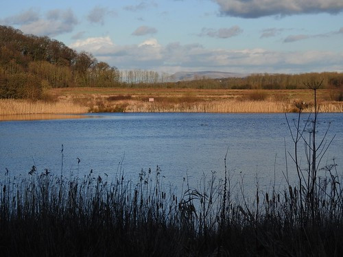 Pendle Hill from Brockholes Nature Reserve near Preston, Lancashire,UK - February 2016