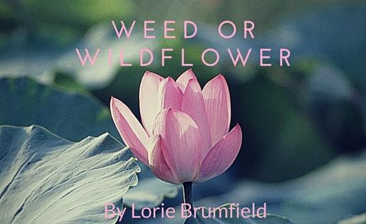 Weed or Wildflower
