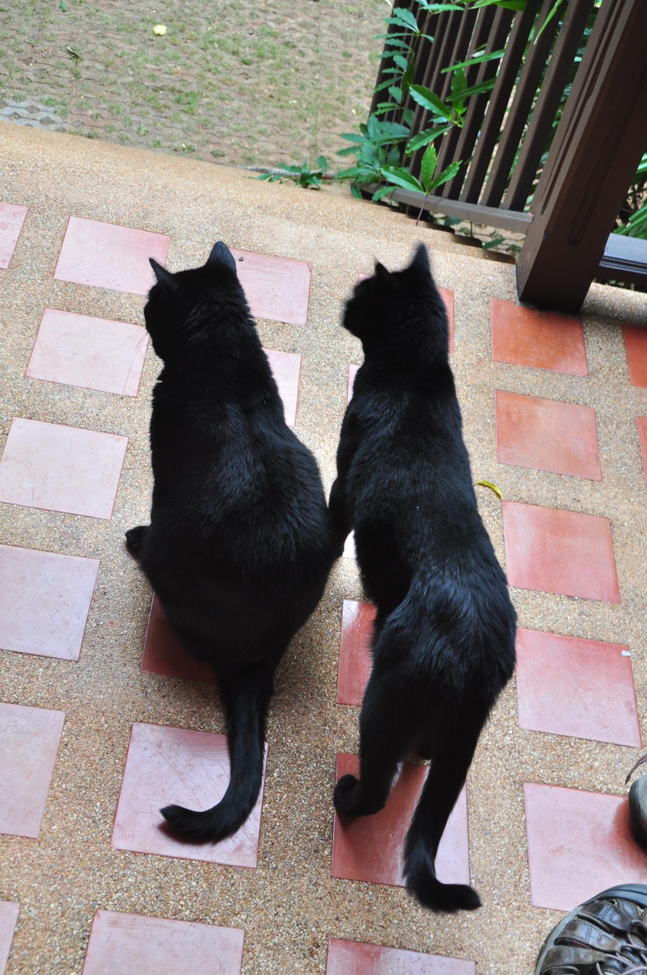 George and Jack
