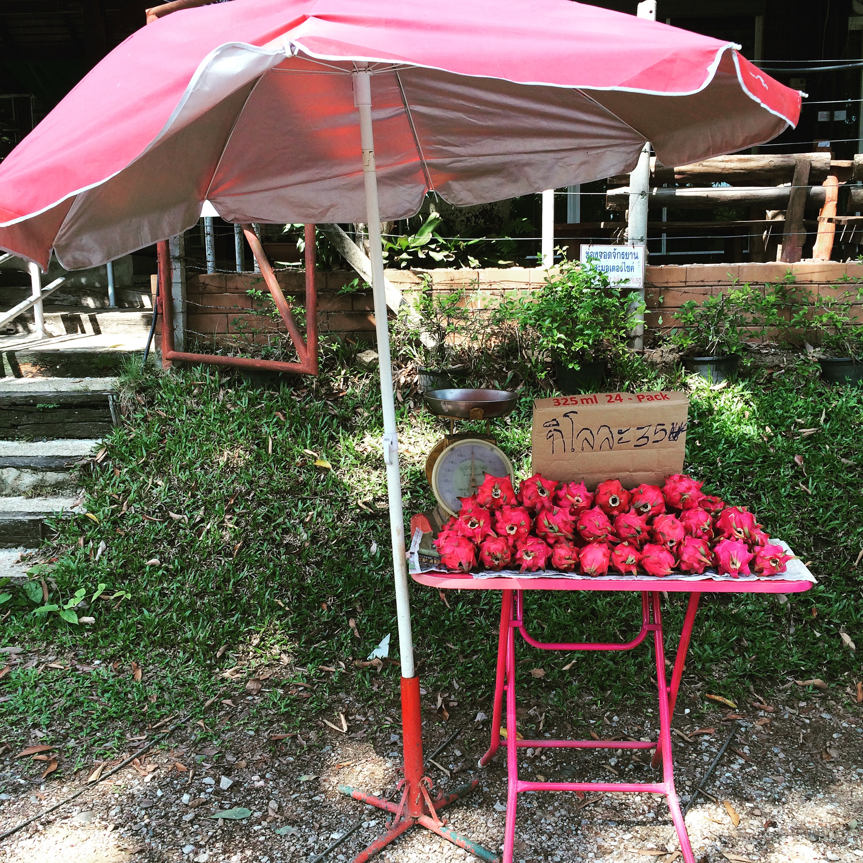 Dragon Fruit For Sale