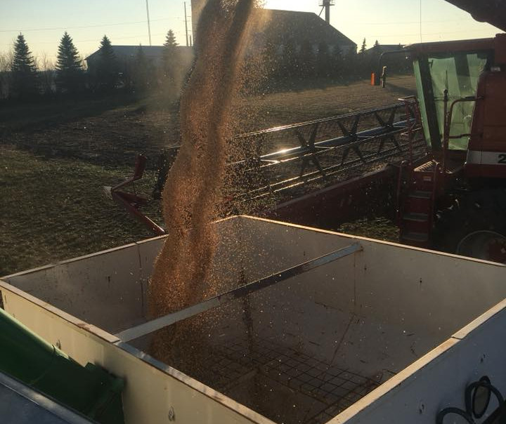 Harvesting Plot