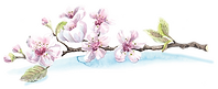 Blossoms-Branch.png