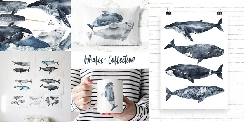 whales collection
