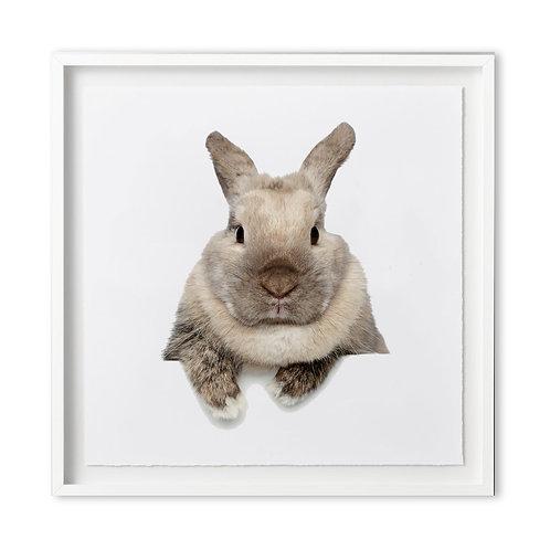 Fine art print - Bunny